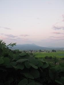 kudzu mountain sunset